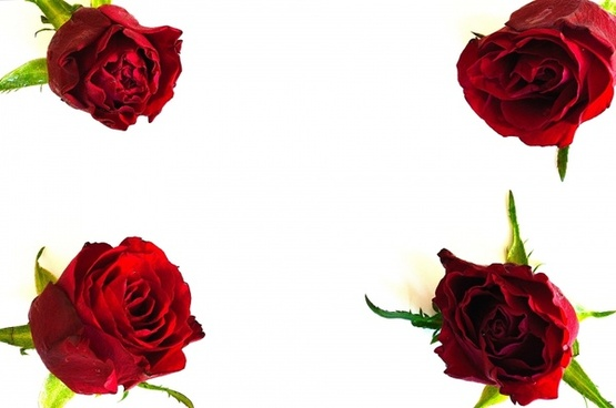 Four Roses Background